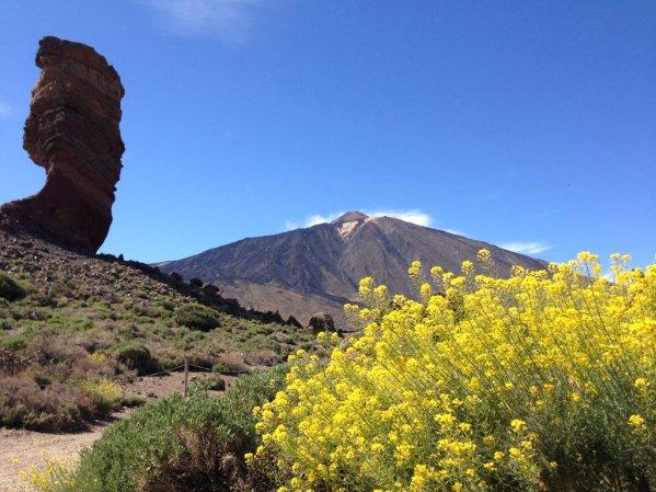 """Roques de García and Pico del Teide, vpravo kvet """"Retama"""""""